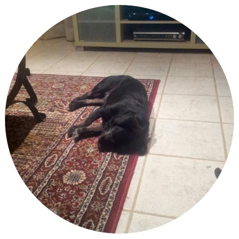 Sleepy Dog from Perth, Australia